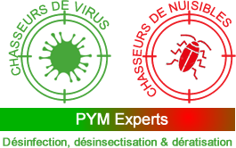 PYM Experts